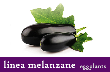 <p><h3>Aubergines in pieces</h3>This product's secret is the recipe. An important selection of raw materials make these Aubergines special. With their spicy taste they are ideal together with your main course.</p>